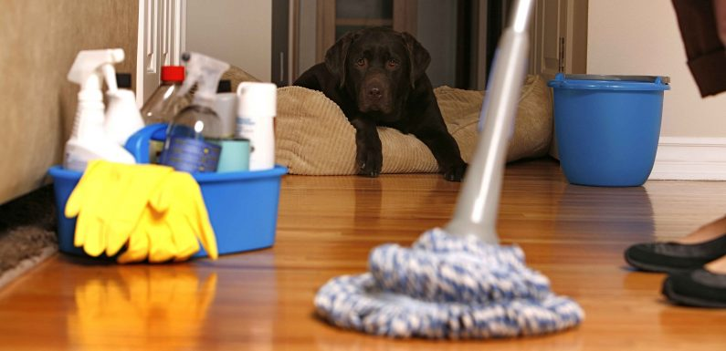 Types of Cleaning Services